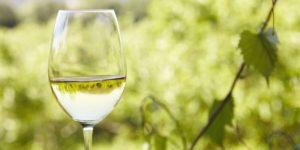 wine tour glass